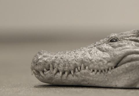 scarpe coccodrillo 4