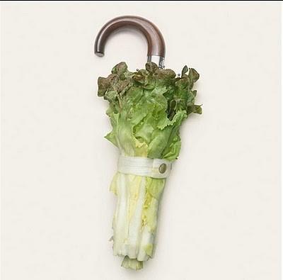 ombrello di lattuga