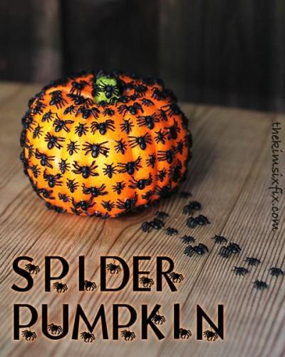 zucca-halloween-ragni